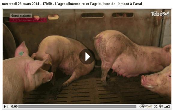 video_porc